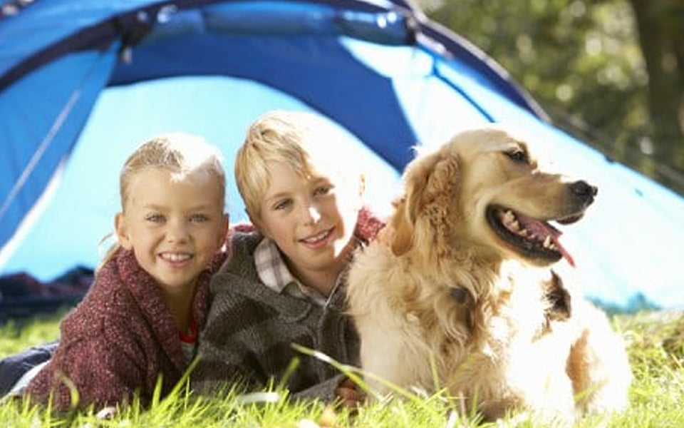 Camping with your dog and dog-friendly campsites in Cornwall