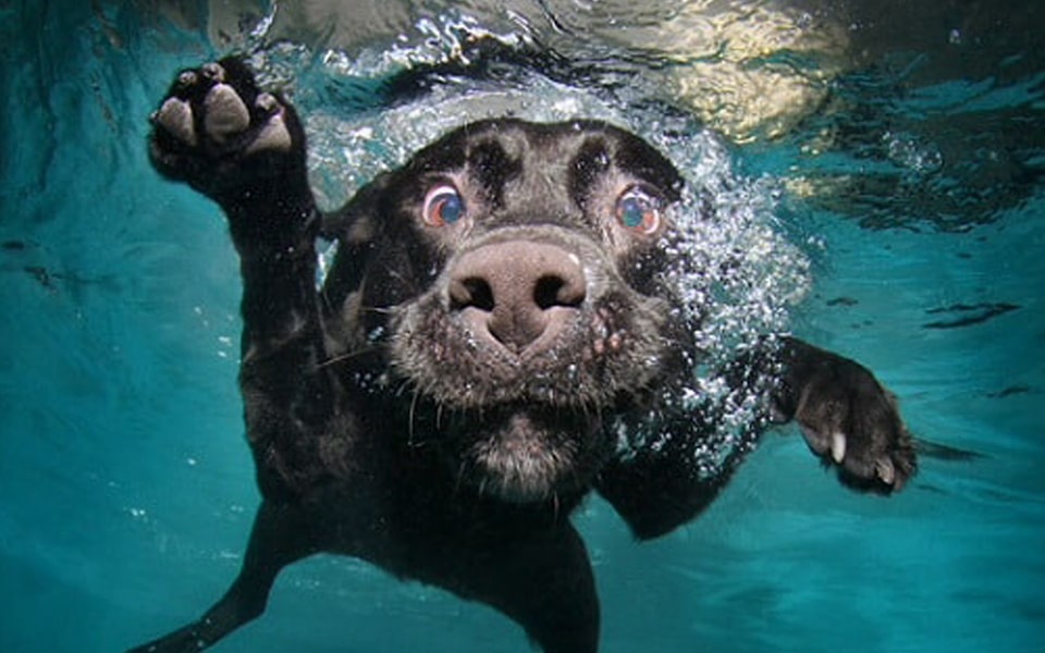 Photo gallery: Dogs underwater
