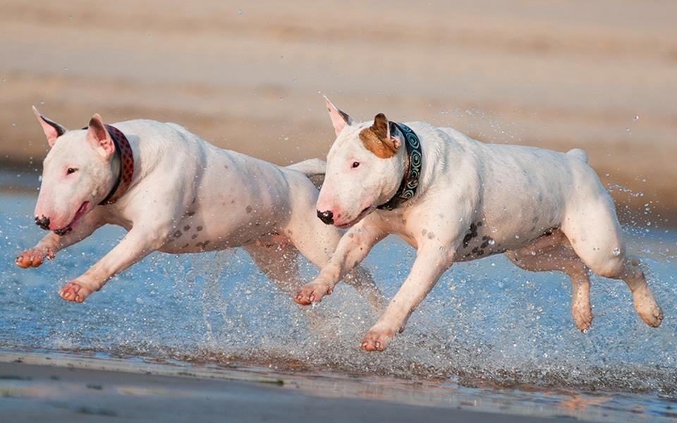 The Dog Beach Boogie