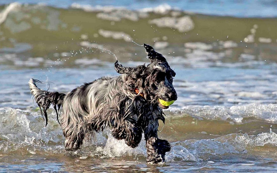 Keep your dog safe at the beach