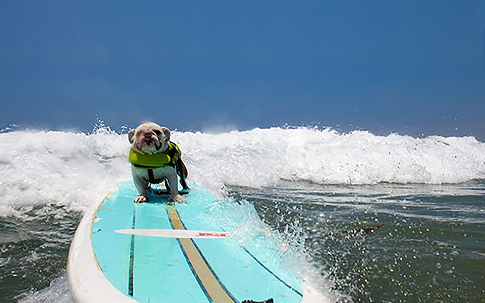 Who says dogs can't surf?