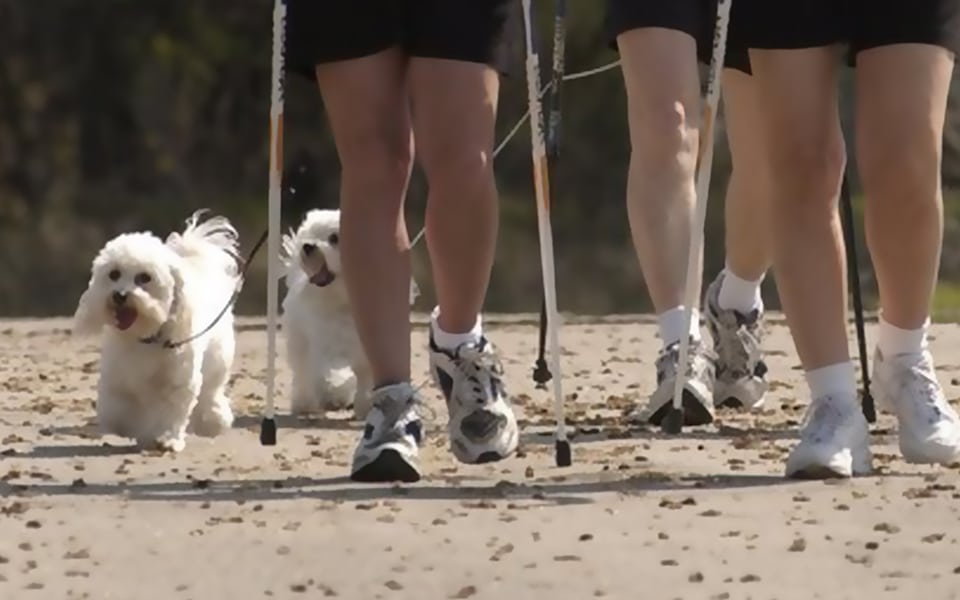 Nordic walking with your dog in Cornwall