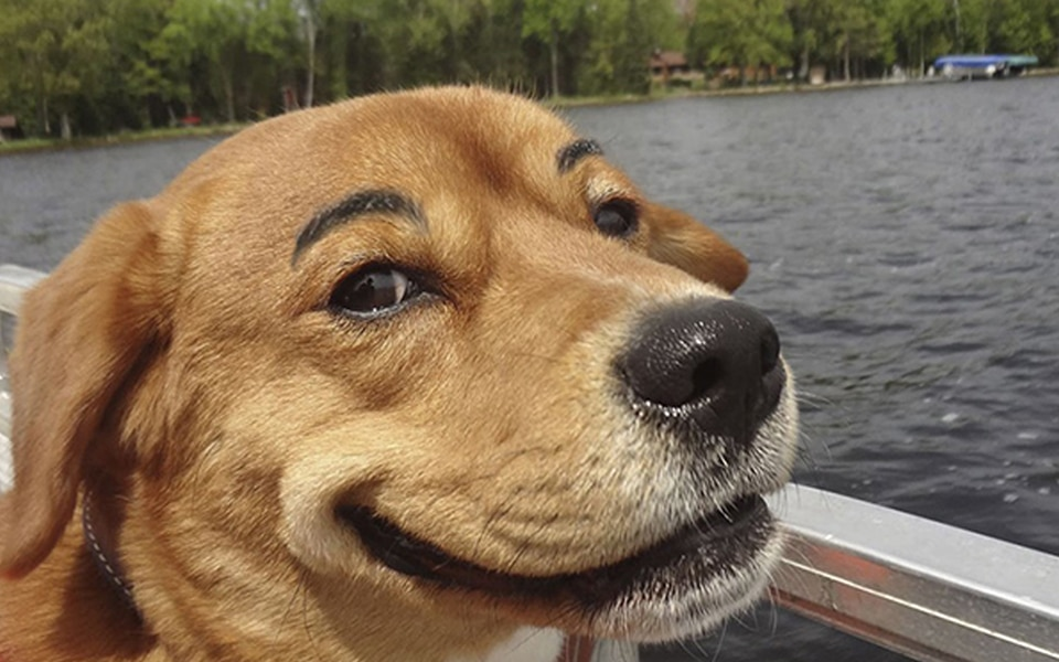 Dog friendly river cruises in Cornwall