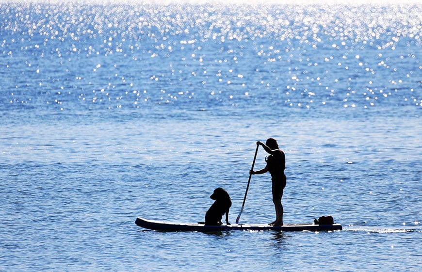Paddler and Dog on Standup Paddle Board, sunny day with blue sea