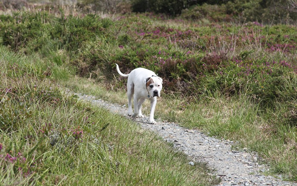 Dog Friendly Places To Eat Near Shap