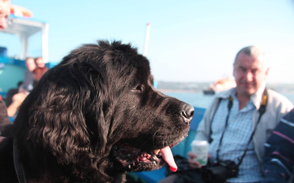 Dog friendly boat trips in Cornwall