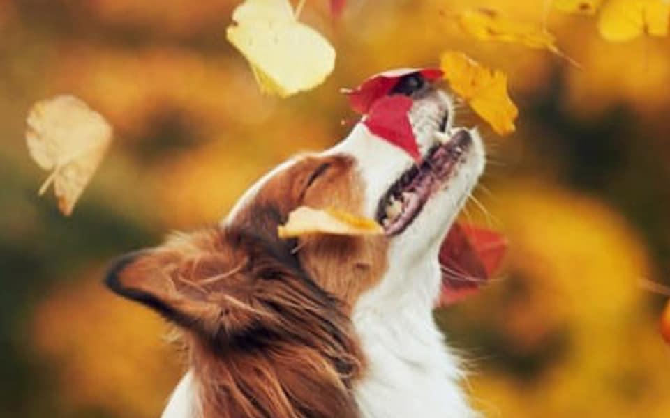 Photogallery: dogs love autumn!