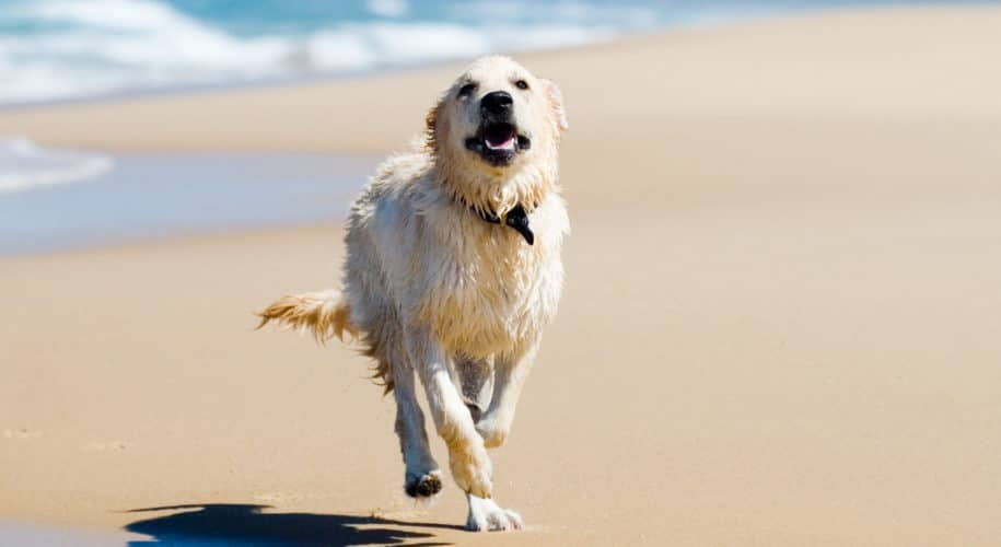 Dog Friendly Cornwall beach guide