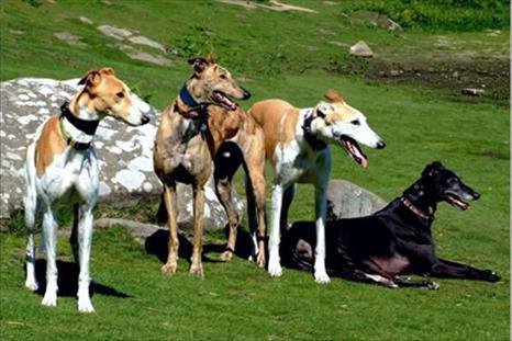 Dog Friendly Lark Lane