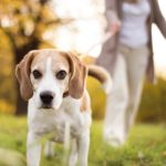 Dog Friendly accommodation in Cornwall