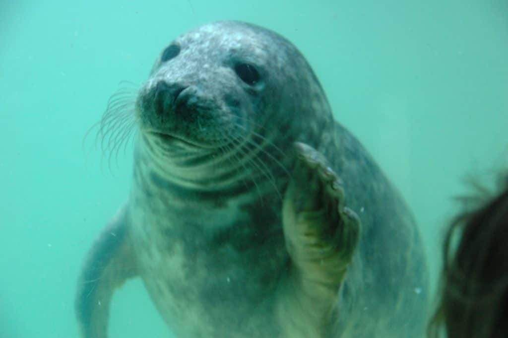 Cornish seal sanctuary