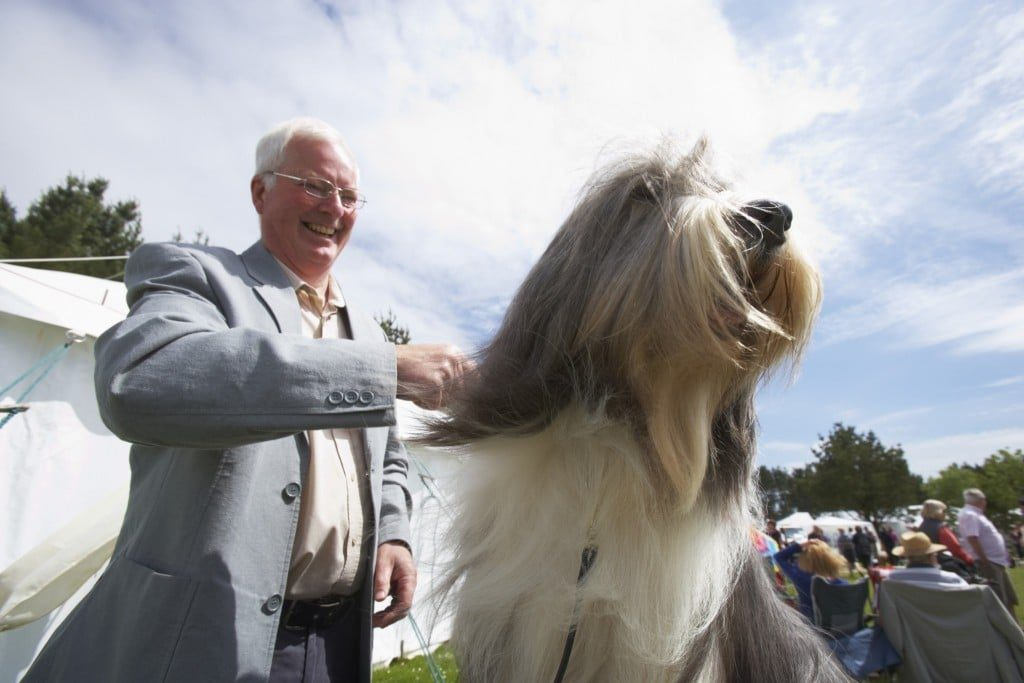 Cornwall's top dog shows for spring & summer 2016