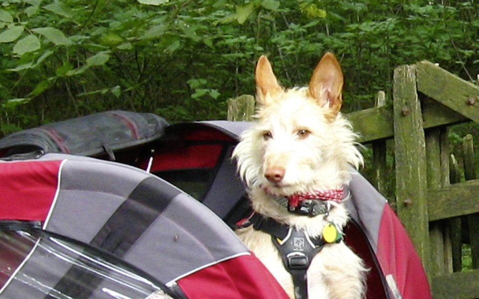 Take your dog for a bike ride in a dog trailer!
