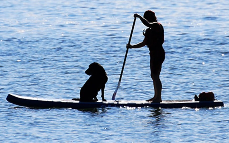 Dogs Stand Up Paddleboarding