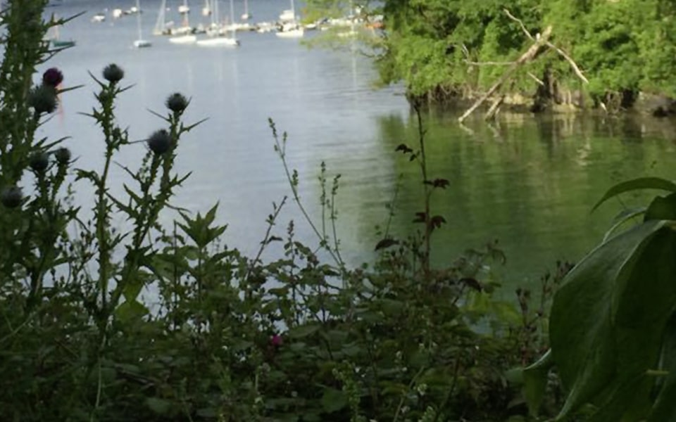 Enjoy a Dog Friendly Day out at Helford, Cornwall