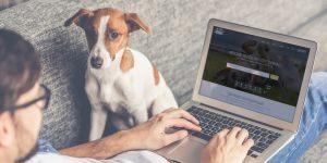 Dog Friendly Cornwall - Add Listing