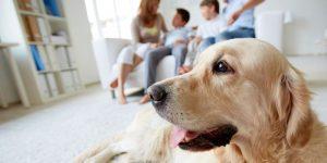 Dog Friendly Cornwall - Take Bookings