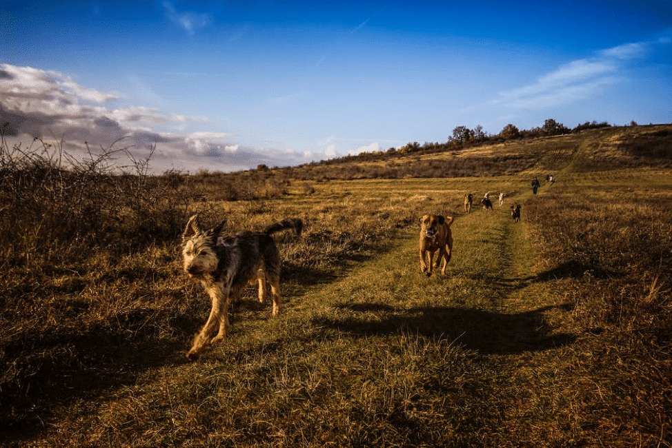 Walking in Cornwall: how to plan a dog-friendly trip