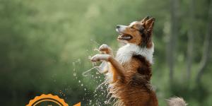 Dog Friendly Cornwall Autumn 2018 issue