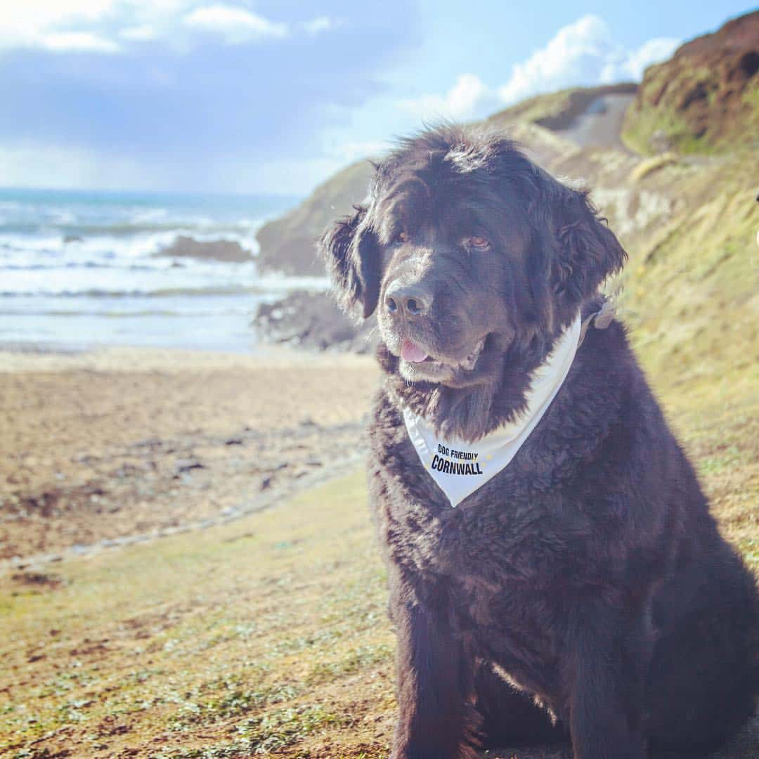 Happy 10th birthday to Rosie of Dog Friendly Cornwall