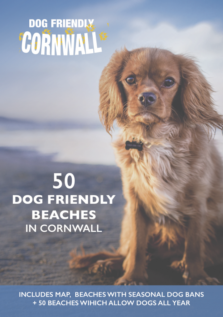 Dog Friendly Beaches in Cornwall guide