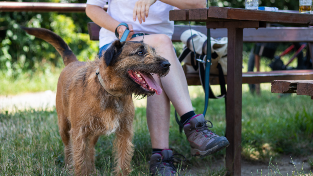 Dog at an outdoor table with owner