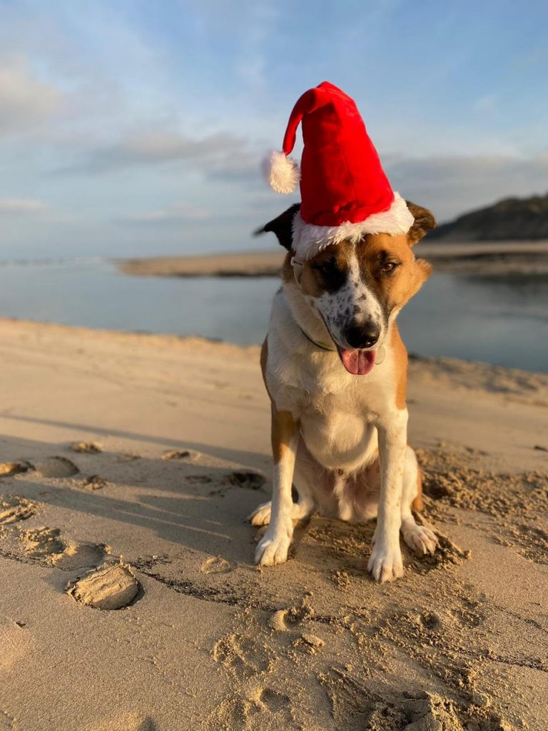 Dylan the dog in a Christmas hat on Porthkidney beach, Cornwall