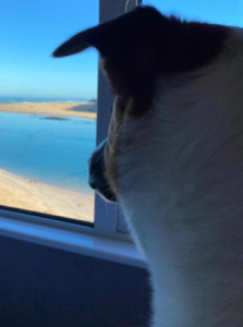Dylan the dog at Beachpads, St Ives in Cornwall
