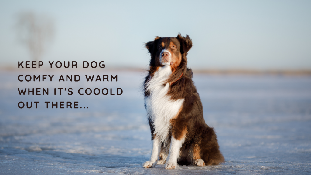 Keep your dog comfy and warm in the cold weather