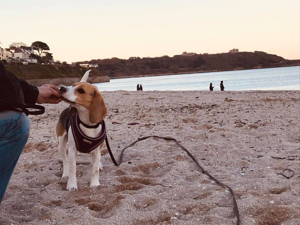 Dog at the beach in Falmouth, Ruths Pet Behaviours Services